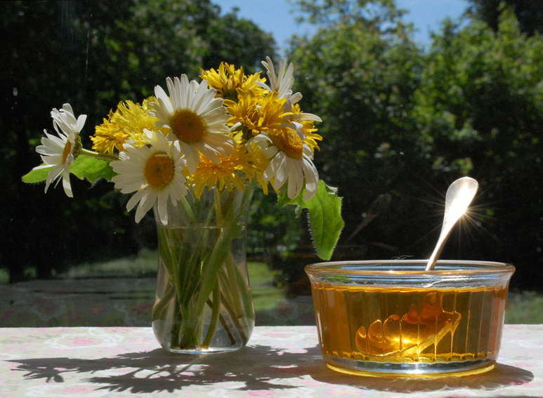 Dandelion Jam (Cramaillotte)
