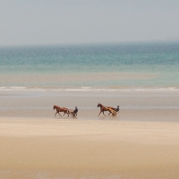 Horse Sulky on the beach | Culinary Holidays