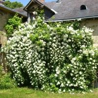 Garden château
