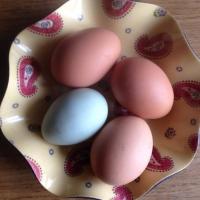 Blue eggs