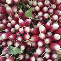 Radishes | Culinary Holidays