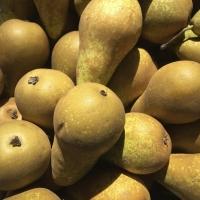 Pears | Culinary Holidays