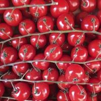 Tomatoes | Culinary Holidays